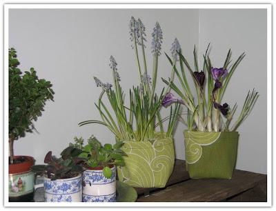 Blompåsar