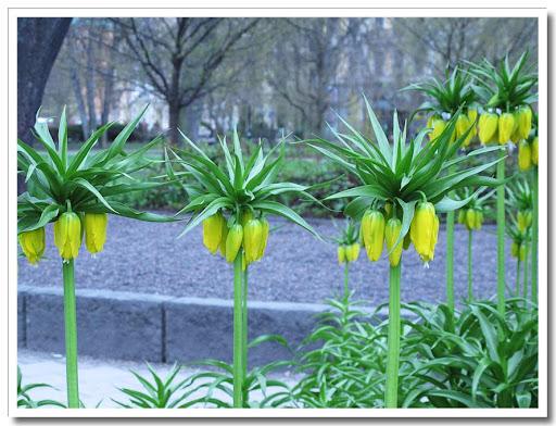 Konstiga blommor i Berzelii park