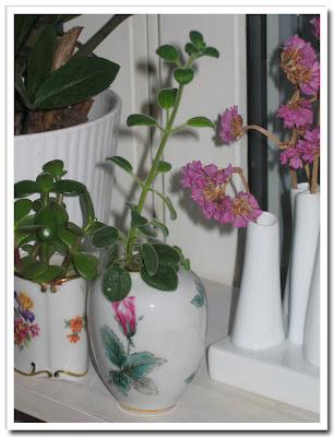 Blomskott växer på höjden