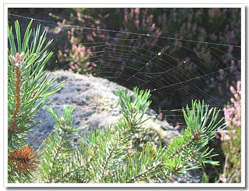 Glittrande spindelnät