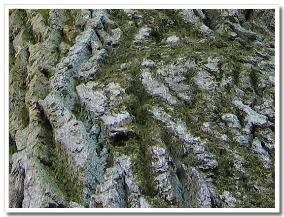 Mossig trädstam