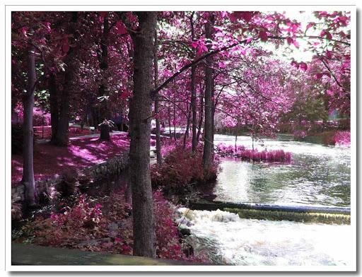 Tidan galen rosa