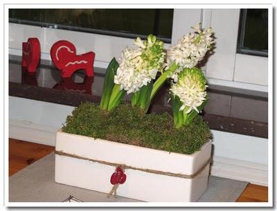 Virriga hyacinter