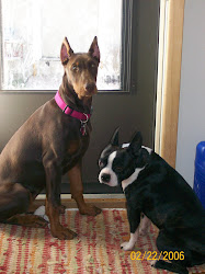 Rosie & Ace