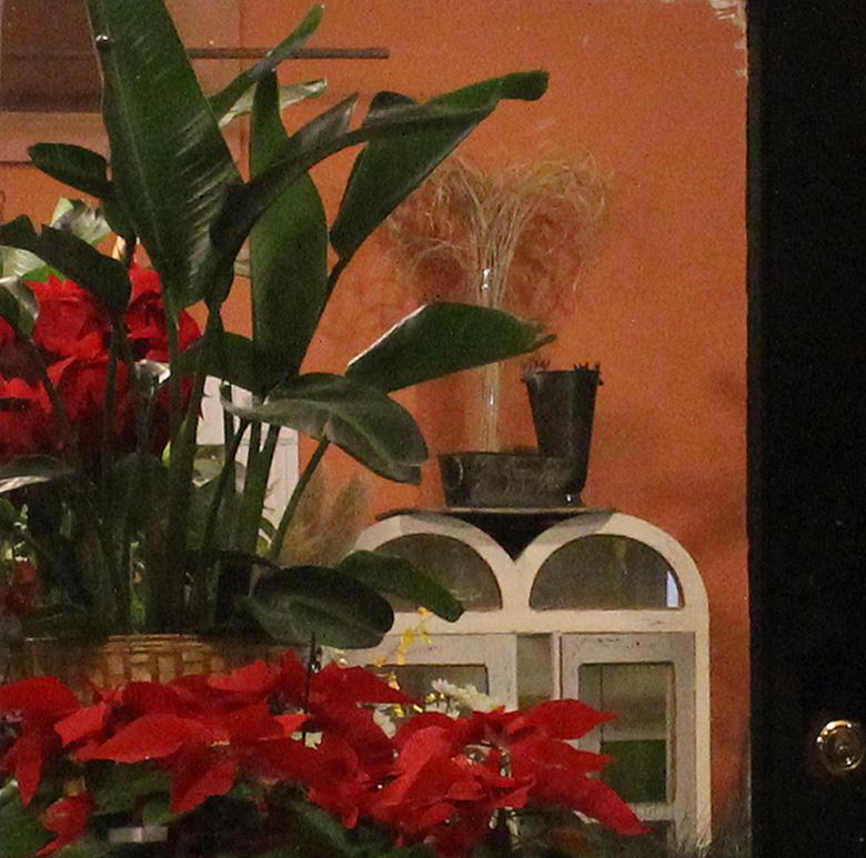 Pointsettias in florist shop, Southport, Chicago, Christmas, 2010