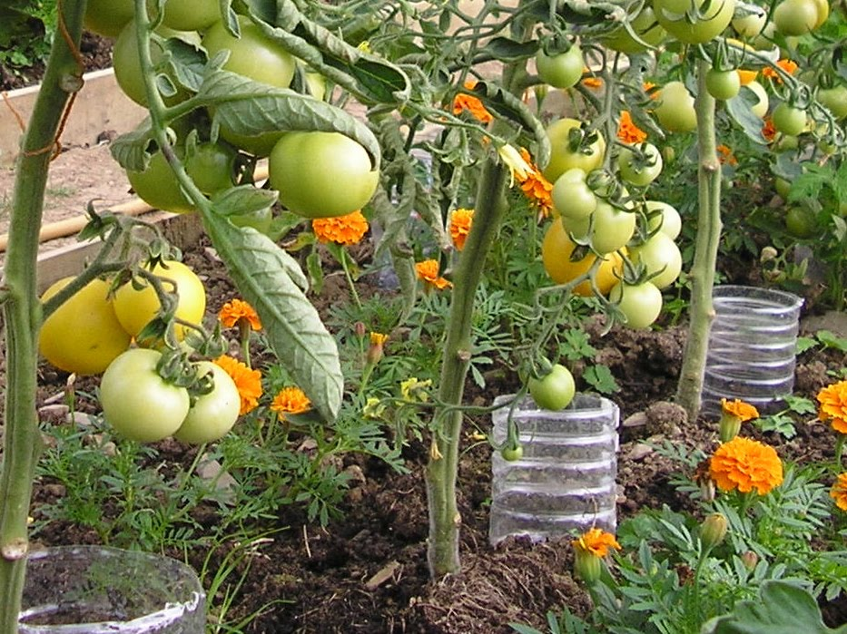 Image Result For When To Water Vegetable Garden Morning Or Evening