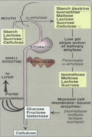a testing involving carbohydrates Routine biochemistry tests eg lactate, glucose and second-line metabolic tests   synthesised in patients with galactosaemia who are on strict dietary galactose.