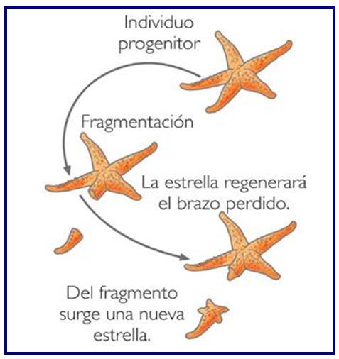 Elmilciencias *CÓMO SE REPRODUCEN LOS ANIMALES.