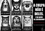 ADOTE UM ANIMAL DE RUA