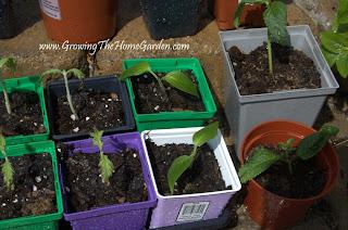Plant Propagation, perennials