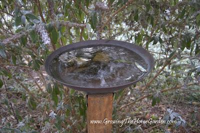 picture, frozen, birdbath, rustic, frost