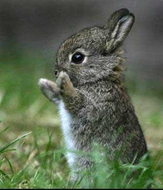 juego de los REGALOS!!! - Página 5 Conejo-bebe