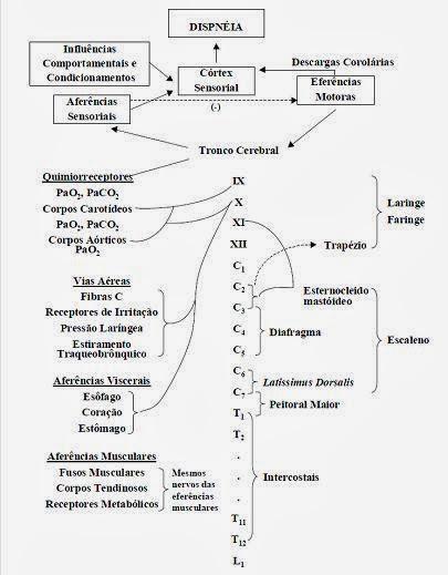 Resultado de imagem para fisiologia da dispneia