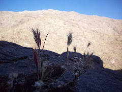 hearty grasses growing in the rock
