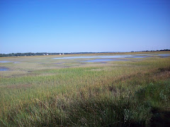 the marshes of Saint Simons