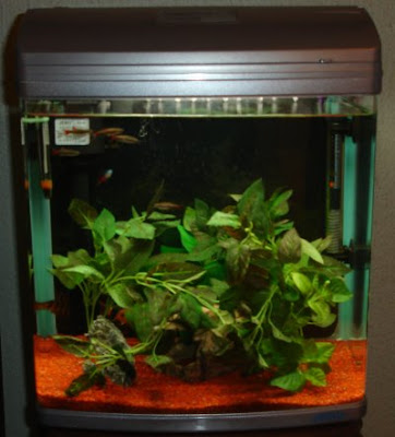 Jebo R338 Aquarium