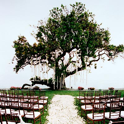 Outdoor wedding ceremony decorations ideas wedding for Backyard wedding ceremony decoration ideas