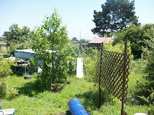Backyard, Summer 2010