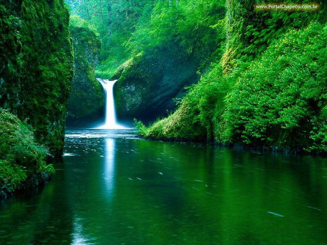 Maravilhoso...O Verde que é Vida