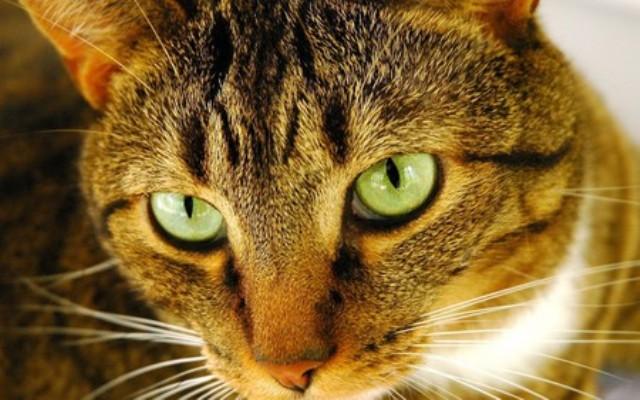 453196 - Cute Cat....