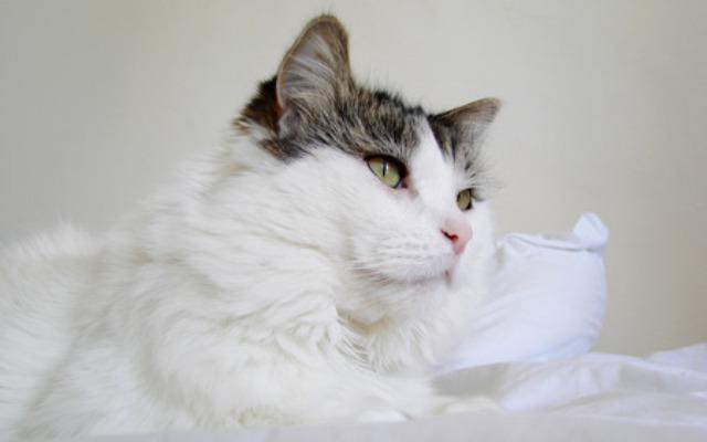 278750 - Cute Cat....