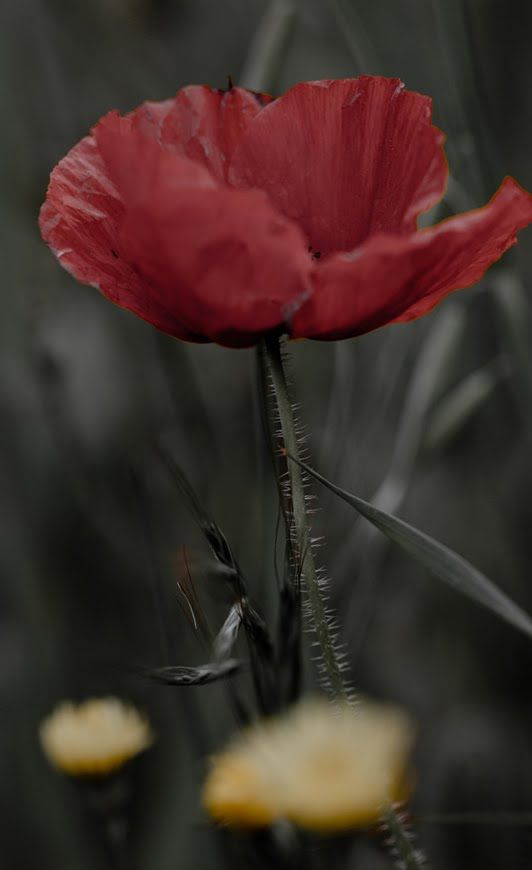 10976490 - The Exotic Flower In Best Photography