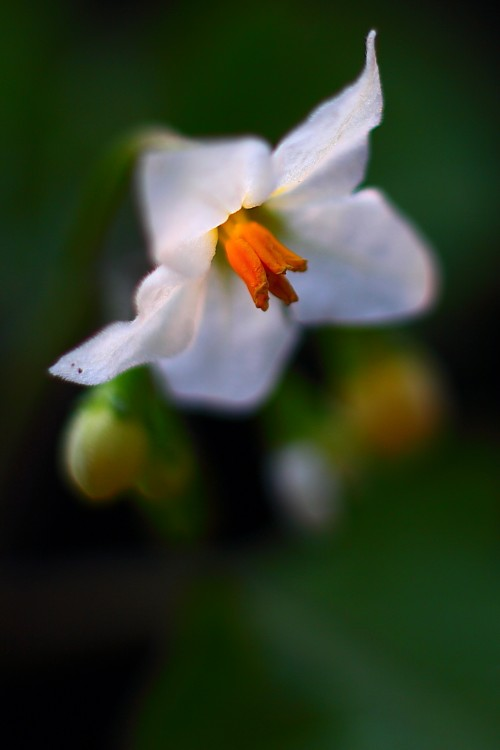 10790030 - The Exotic Flower In Best Photography