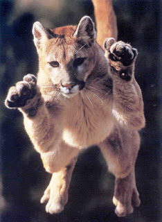 Les 10 Bonnes Raisons De Sortir Avec Une Cougar