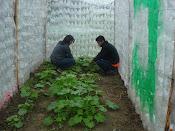 Invernadero ecológico en Oaxaca