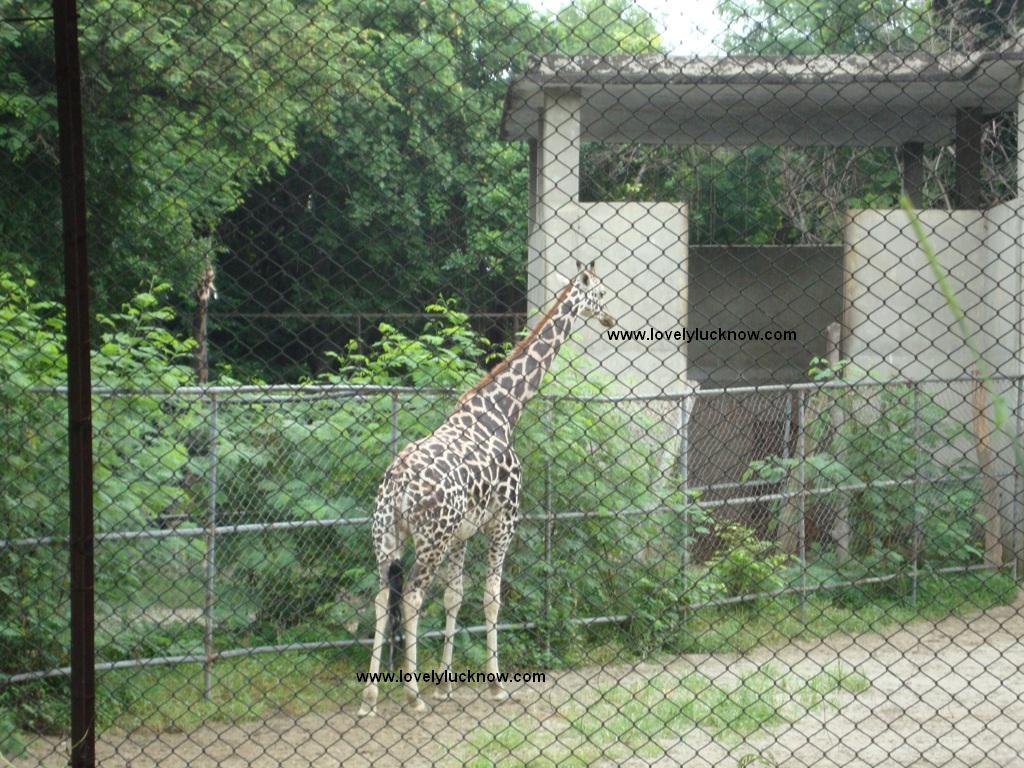 http://4.bp.blogspot.com/_P5BSOScYF6A/TJje60LOP5I/AAAAAAAAEIw/yF_Aufmoid4/s1600/zoo-in-lucknow%2B(57).JPG