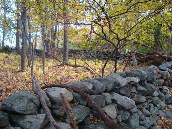 New York Landowners Stone Walls