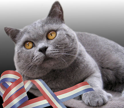 _HoT&CoLD_: jenis-jenis Ras Kucing