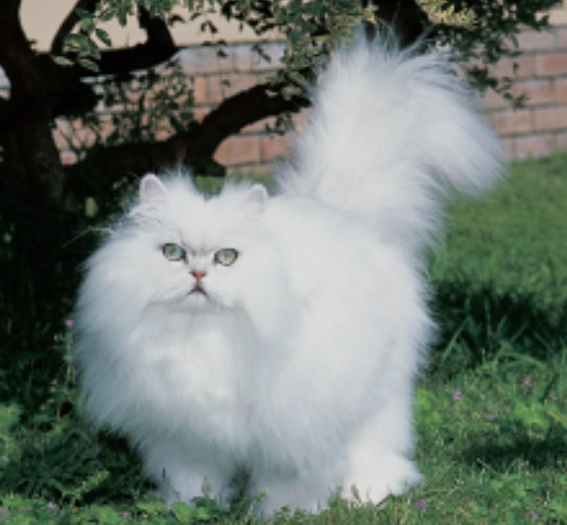 Hot Amp Cold Jenis Jenis Ras Kucing