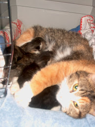 Mattie nursing her kittens