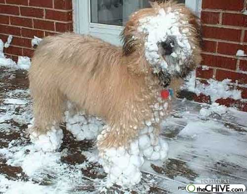 hot_weird_funny_amazing_cool3_a-dogs-snow-balls-2_200907260216109600 ...