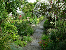 Down my garden path