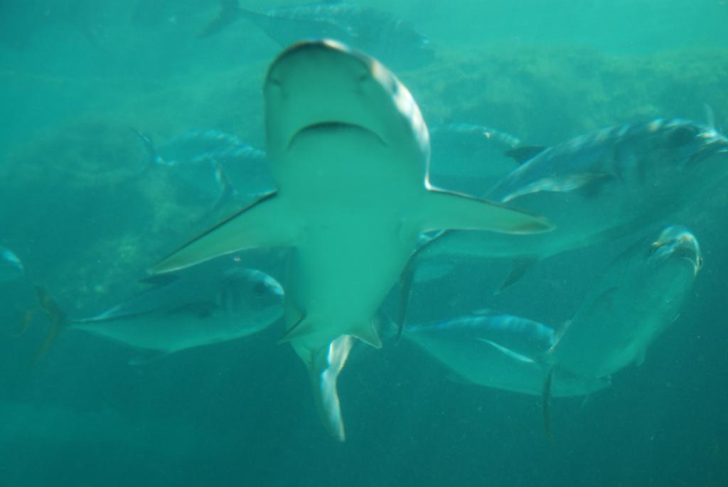 [shark.jpg]