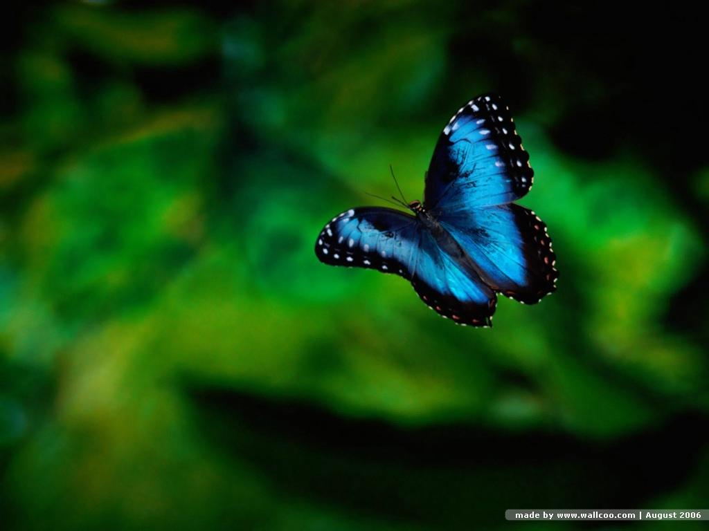 http://4.bp.blogspot.com/_PBIaOefsDXI/TCRfhtU3cVI/AAAAAAAACJE/Hp38RfwXEXY/s1600/butterfly-wallpaper1.jpg