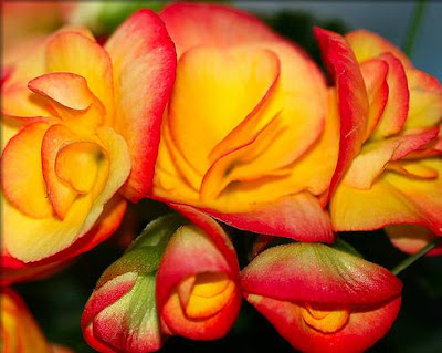 Best Flowers In The World Most Beautiful Flower Pictures
