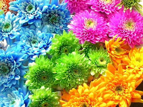 best flowers in the world best flowers