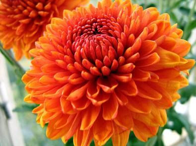 Best flowers in the world best flowers photos