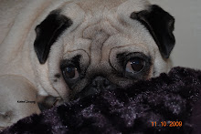 Snowpug`s Baroness Marie of Victory