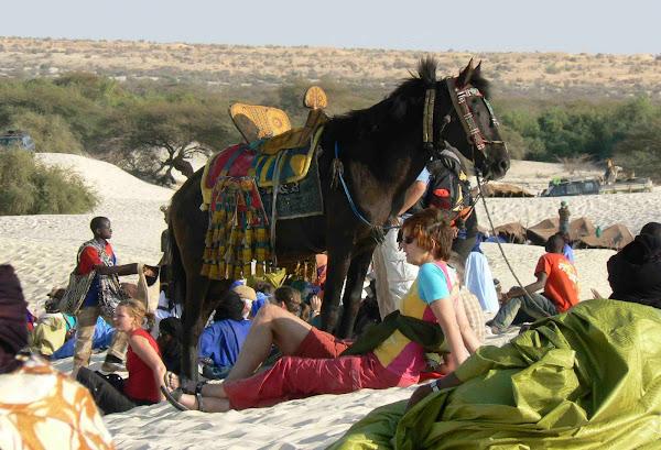 Tuareg Horse
