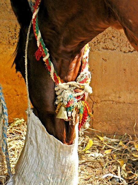 Cart Horse's Amulet