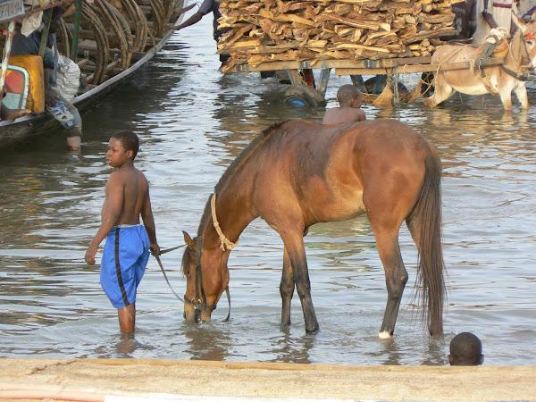 Fulani Boy and Horse