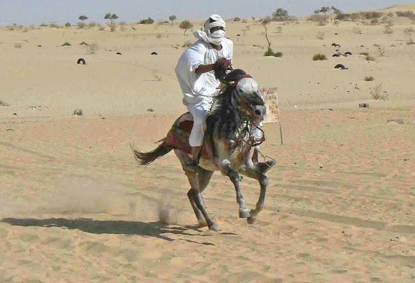 Horse of the Desert