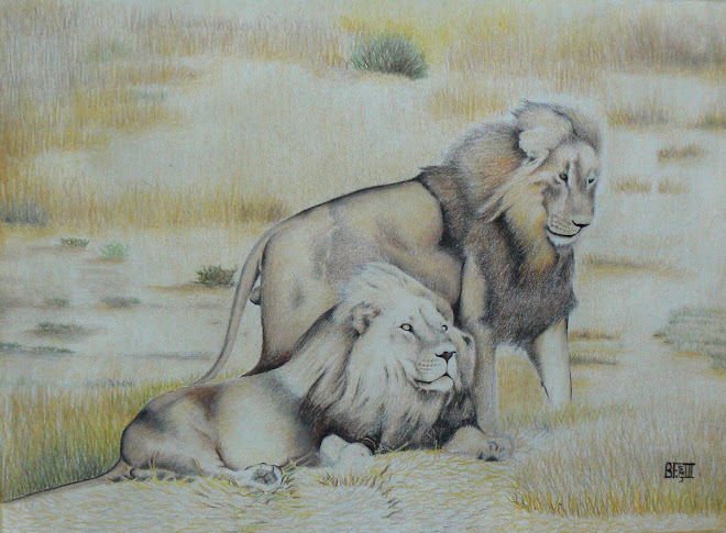 Pair of Male Lions