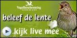 'Live' webcam-beelden van o.a. koolmees. Steenuil en Oehoe.