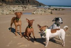 Mis doggies