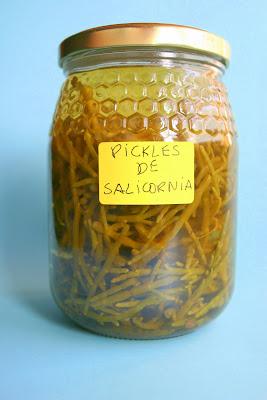 A salicórnia ou cachelro Salicornia06
